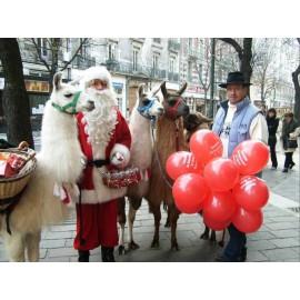 Père Noël et ses lamas