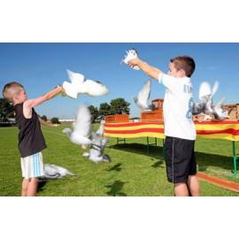 Lacher de colombes pour enfants à Lyon