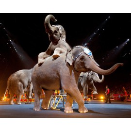 Location éléphant événement prestigieux