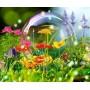 Animations sur le thème du printemps