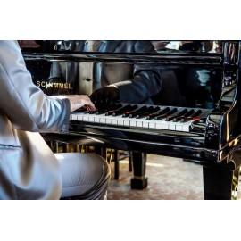 Musicien Pianiste