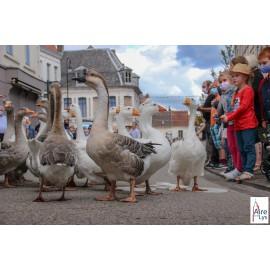 Spectacle de rue avec des oies - chien - Oiseaux - Anatidé -